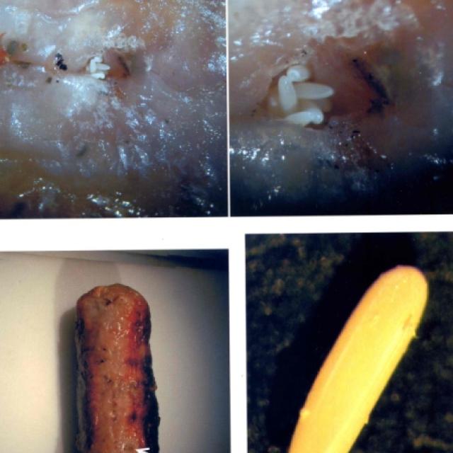 lucilia eggs and sausage chris